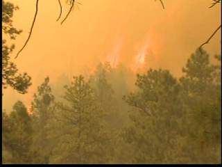 Wallow fire biggest in AZ history