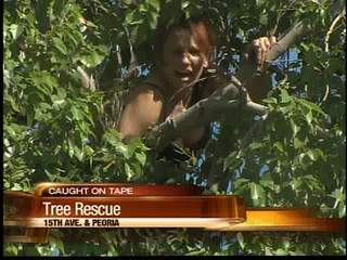 Caught on tape: Woman on drugs gets stuck in Phoenix tree