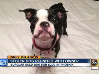 Stolen dog returned