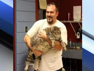 36-pound cat, 'Meatball' at MCACC