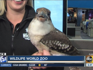 VIDEO: Funny bird steals the show at ABC15