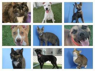 10 PetSmart Charities Pets of the Week