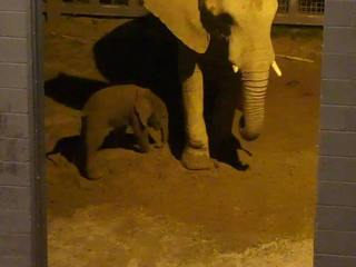 PHOTO: Baby elephant born at Tucson zoo