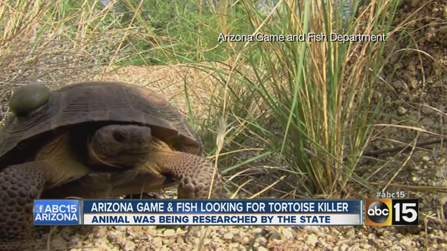 Jobs with the department of fish and game floorprogs for Arizona fish and game