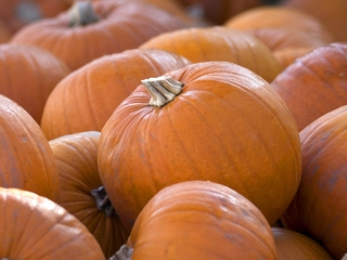 FUN! 13 pumpkin patches to visit around Arizona