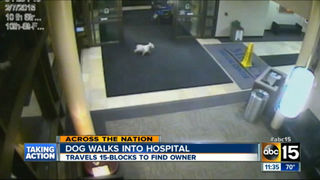 Dog shows up at hospital to find sick owner