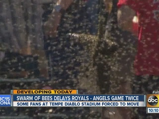 Bee swarm holds up Spring Training game in Tempe