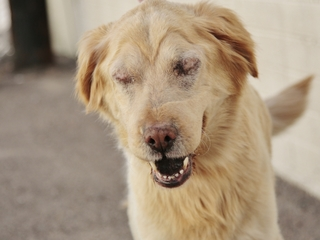 Rescued dog with special needs ready for a home