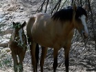 Group concerned for wild horses near Cactus Fire
