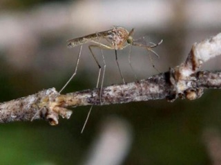 Mosquitoes more active as weather heats up