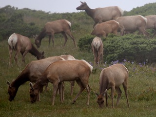 Game and Fish seek info on elk poaching case