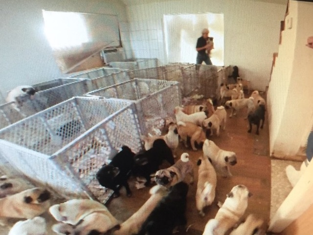 Puppy mill listings
