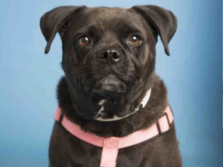 Pet of week: Lula needs home for the holidays
