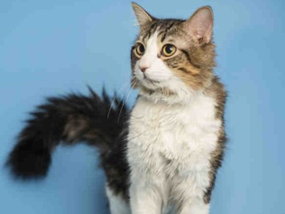 Pet of the week: Figaro the cat up for adoption