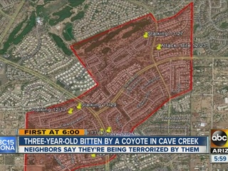 More coyote encounters reported in Cave Creek