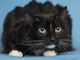 Pet of week: Cookie needs the 'purr-fect' home