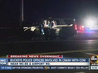 Police vehicle and cow collide in Buckeye
