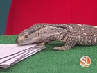 Meet Marbles from Wildlife World Zoo
