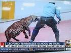 Wandering leopard injures three at Indian school