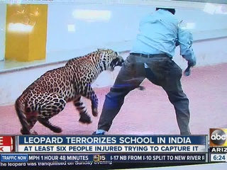 Wandering leopard injures three at Indian school