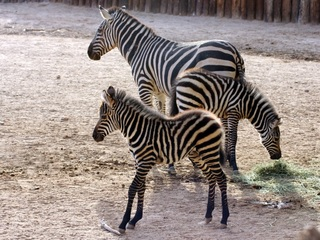West Valley zoo welcomes new baby animals