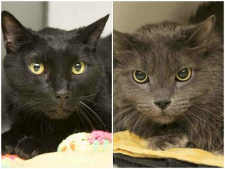 Pets of Week: Rolf and Zig need family to love