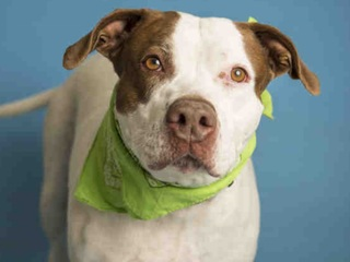 Pet of week: Tootsie looking for family to love
