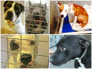 Long-time shelter pets waiting in Pinal County