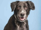 Pet of the week: Buster needs a family to love