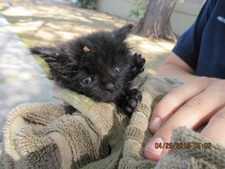 Kitten rescued from manhole after three days
