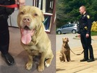 Ohio police adopt stray dog as their own