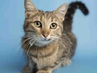 Pet of the week: Delilah looking for loving home