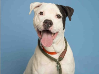 Pet of week: Rookie looking for 'furever' home