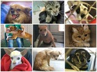 Phoenix-area shelters overflowing with animals