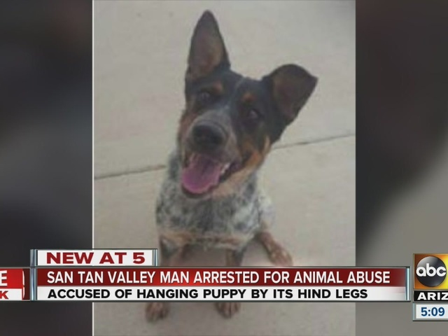 Man accused of hanging 6-month-old puppy