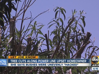 Homeowner says bushes unevenly 'hacked'