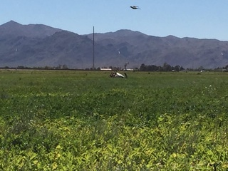 Helicopter crashes in Waddell, pilot hurt