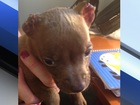 Reward offered in case of puppy with cut ears