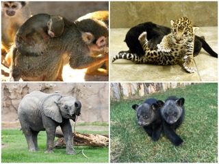 Aww! 15 baby animals to see at AZ zoos right now
