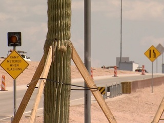ADOT salvaging 1K cacti and trees to line L-101