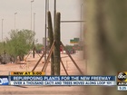 Hundreds of saguaros moved during freeway work