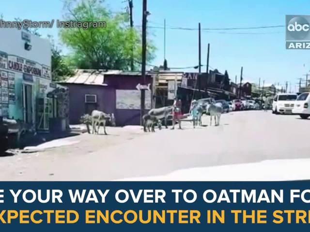 6 secrets about Oatman's Wild Burros - ABC15 Digital