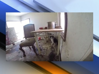 Dogs found living in feces in Buckeye home