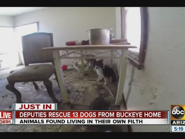 Thirteen dogs removed from Buckeye home
