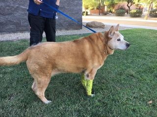MCSO: Sun City woman attacks own dog with knife