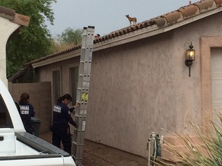 Dog rescued after days on Phoenix roof