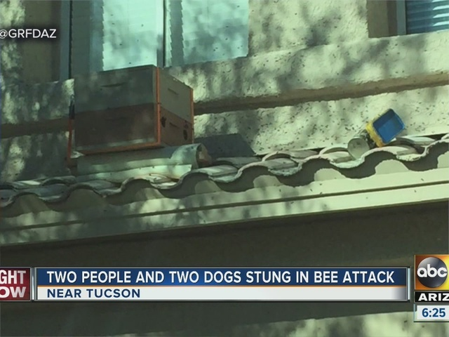 Two people, two dogs stung by swarm of bees in Oro Valley