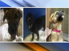 3 puppies stolen from Phoenix animal shelter