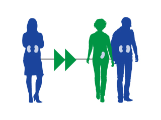 The organ donation chain