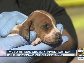 MCSO investigating animal abuse case in Mesa